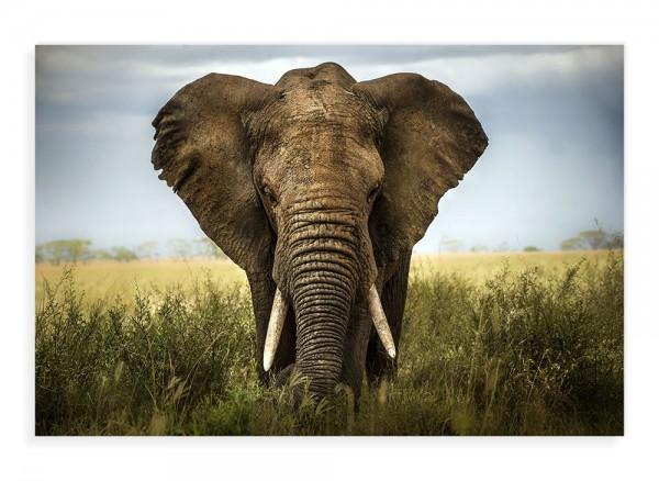 Druck auf Leinwand Naturfotografie Elefant